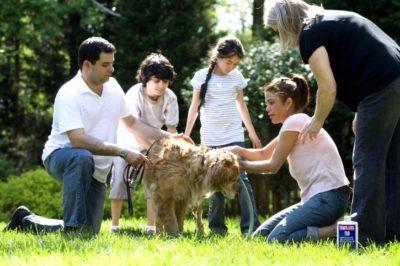 separazione affidamento animali